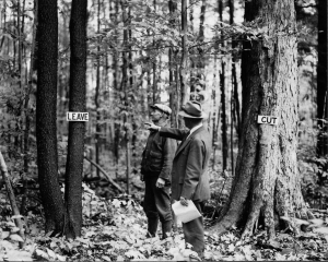 Early forest management was left little to the imagination. Photo courtesy U.S. Forest Service.