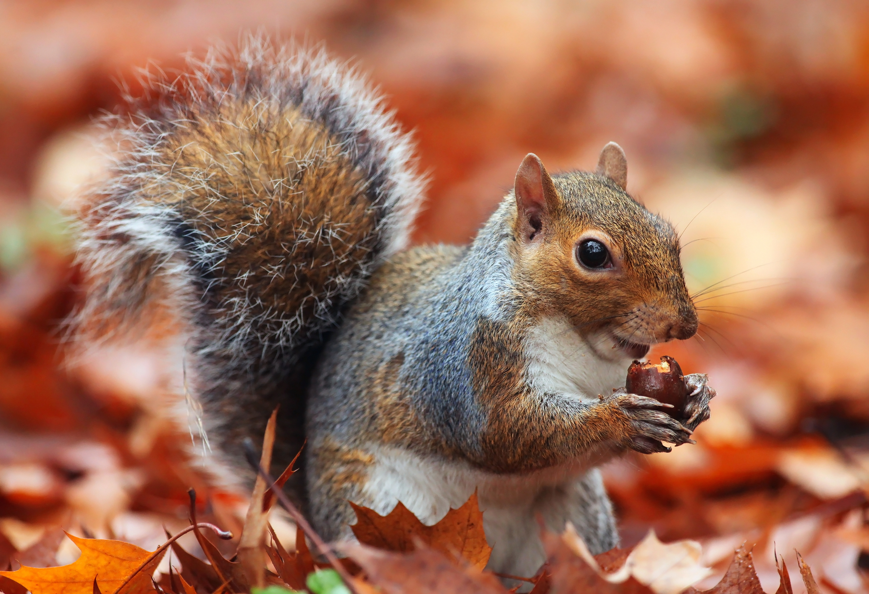 A Squirrel's Guide to Success on PBS Is No Tall Tail ...